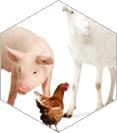 Животноводство и ветеринария